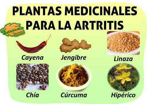 remedios naturales con plantas medicinales para la artritis