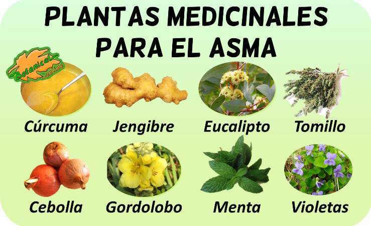 remedios asma tratamiento natural plantas medicinales