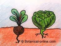 Rotaci n de cultivos for Que son cultivos asociados