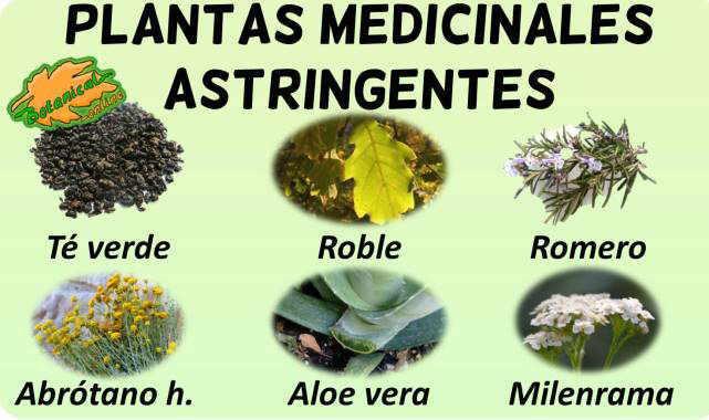 plantas medicinales remedios con propiedades astringentes taninos