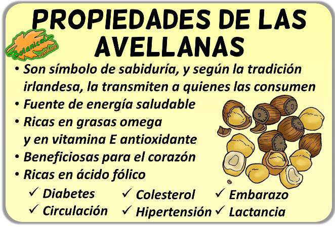 Propiedades medicinales de las avellanas