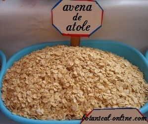atole avena