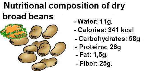 Nutritional composition per 100g. of dry fava beans