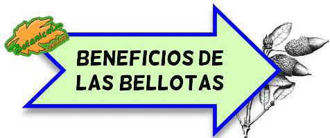 beneficios de comer bellotas