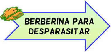 berberina contra parasitos