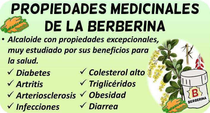 propiedades medicinales y beneficios suplemento berberina