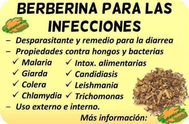 propiedades berberina parasitos infecciones candida bacterias antibiotico natural