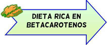 dieta rica en betacarotenos