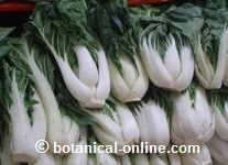 Col china Bok choy