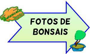 fotos de bonsais