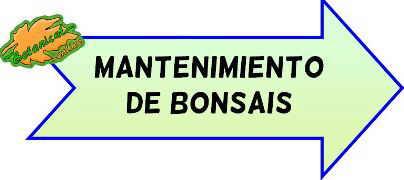 mantenimiento bonsais