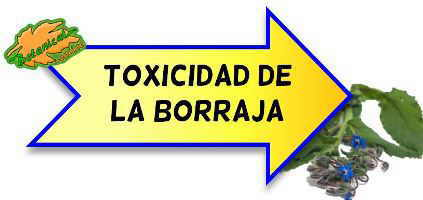 toxicidad de la borraja