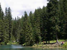 bosque coniferas