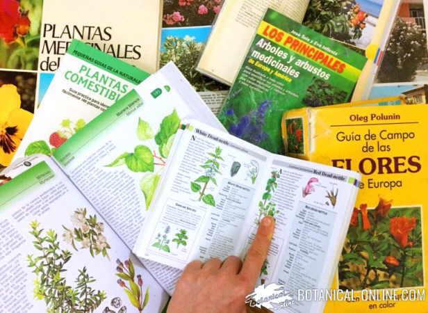 botanica estudio plantas guias de campo