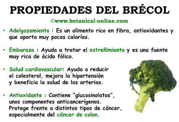 Propiedades y beneficios del brecol o brocoli para la salud