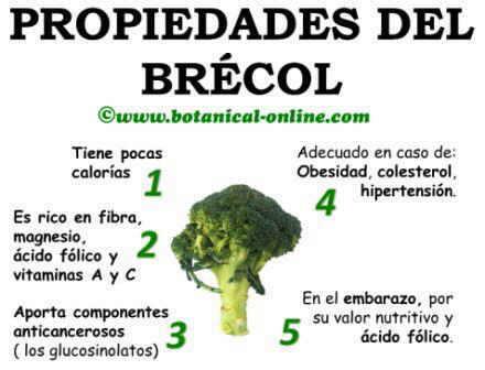 Propiedades curativas del brecol, brocoli y sus beneficios para la salud