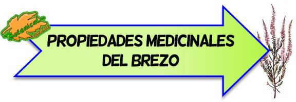 propiedades medicinales del brezo