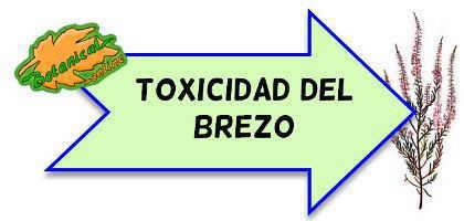 toxicidad del brezo