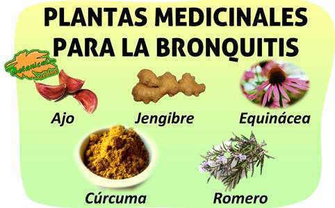 tratamiento natural remedios con plantas para la bronquitis resfriado y tos
