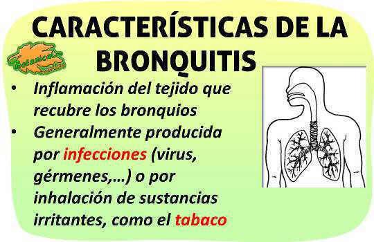 caracteristicas de la bronquitis, que es y definicion