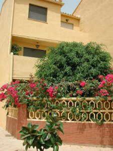 Buganvillia decorando un jardin