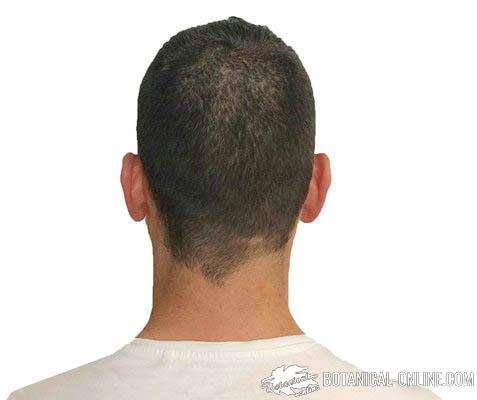 cabeza orejas cuello detras