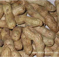 Cacahuetes ricos en vitamina B3 o niacina