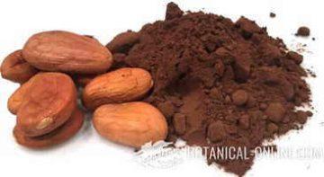 cacao en polvo y con semillas