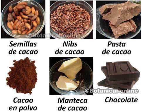 tipos cacao derivados manteca nibs semillas chocolate polvo pasta