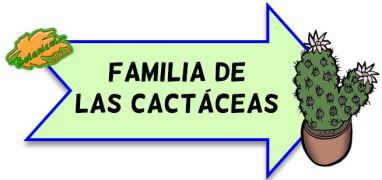 familia de las cactaceas