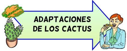 adaptaciones cactus