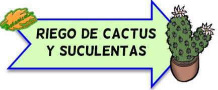 riego cactus y suculentas