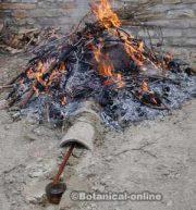 extraccion aceite de cade brea de enebro o ginebro