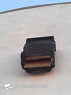 murciélago común