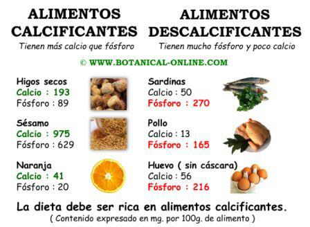 Alimentos calcificantes y descalcificantes, el equilibrio calcio fosforo