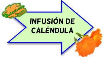 infusion de calendula