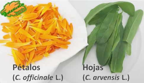 petalos hojas calendula ensalada maravilla recetas