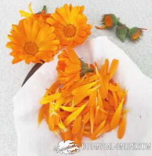petalos flor calendula infusiones