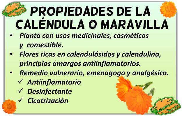 propiedades medicinales de la caléndula o maravilla