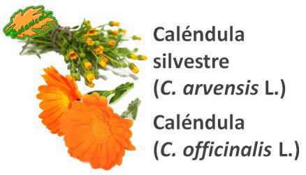 tipos calendula maravilla silvestre arvensis officinale