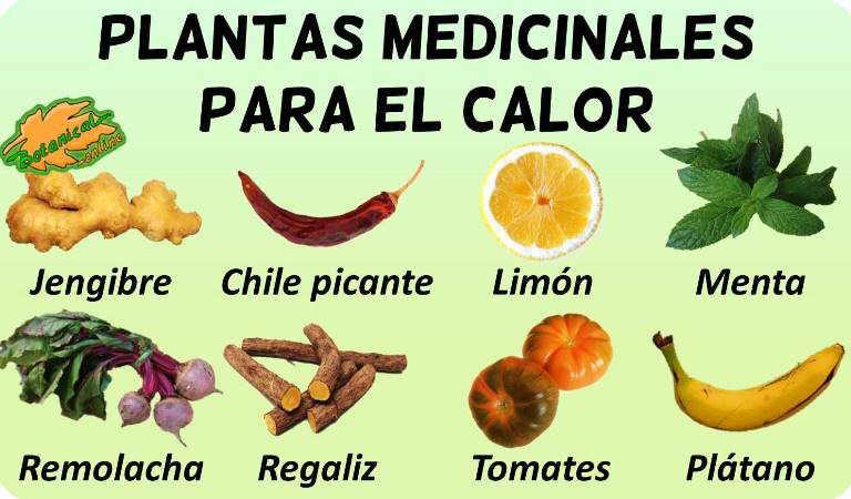 remedios plantas medicinales golpe calor insolacion