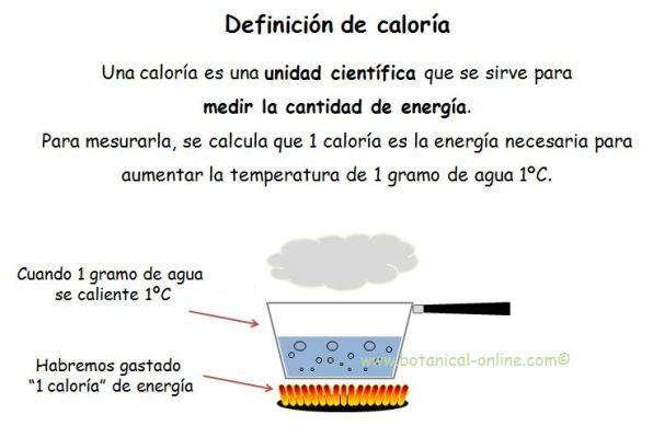 definicion caloria