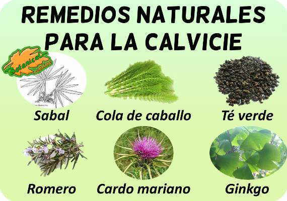 calvicie plantas medicinales remedios suplementos tratamiento natural