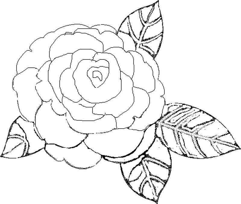Dibujos de rosas para pintar