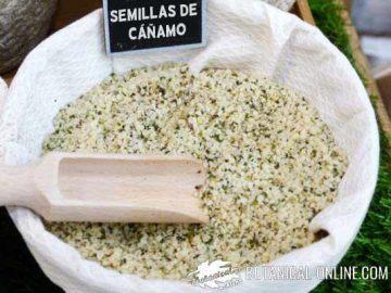 semillas de cañamón