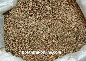 Photo of whole and unpeeled hemp seeds for birds
