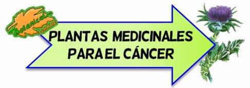 plantas contra el cáncer