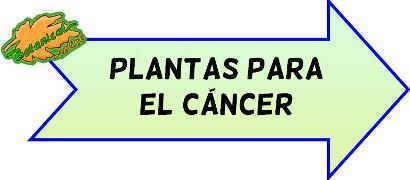 plantas cancer
