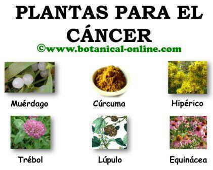 Plantas para el cancer, anticancerigenos naturales