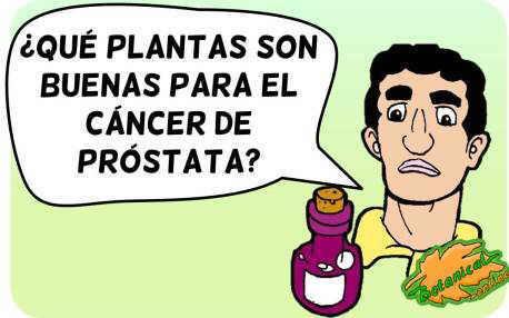 plantas medicinales cancer prostata